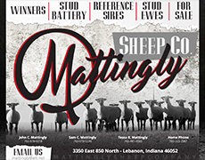 Mattingly Sheep Co.